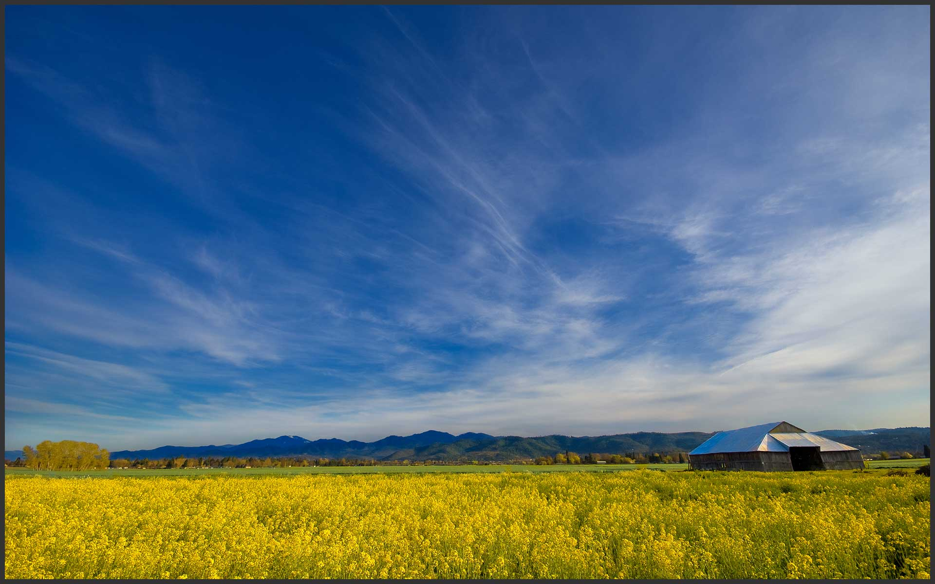 Mustard Field in the Rogue Valley